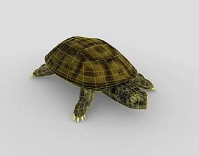 3D asset Swamp Turtle