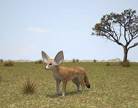 Fennec Fox 3D