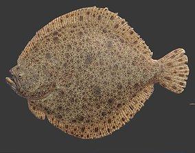 3D asset flounder