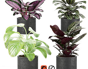 3D calathea Collection 3