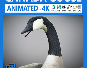 3D Animated Canada Goose