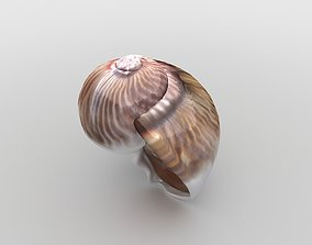 Sea snail spiral 3D model VR / AR ready
