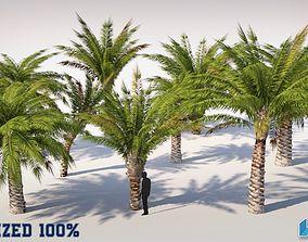 Palm Trees Set Optimized 3D model