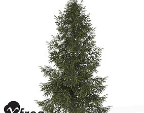 XfrogPlants Colorado Spruce 3D
