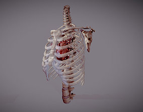 Animated heart inside RibCage 3D model