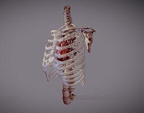 Animated heart inside RibCage 3D model