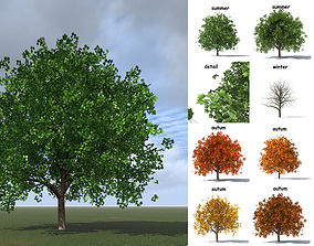 3D model italian maple vegetation
