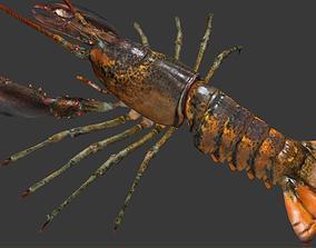 Homarus americanus lobster 3D asset