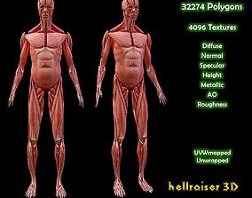 Human Muscular System - PBR - Textured 3D asset