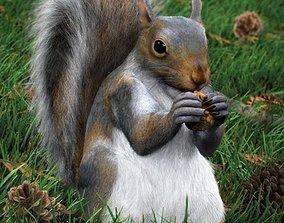 Grey Squirrel 3D