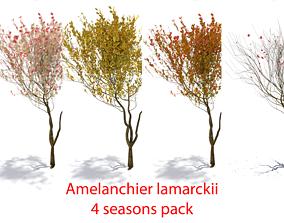 4 seasons amelanchier lamarckii bush pack model 3D asset