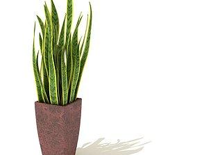 Potted Plant Decorative 3D model