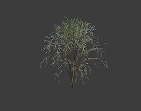 3 different trees plant 3D model