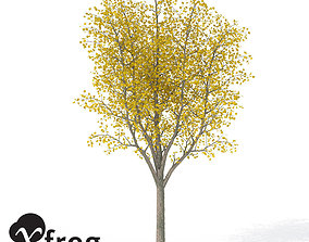 3D XfrogPlants Autumn Sycamore Maple