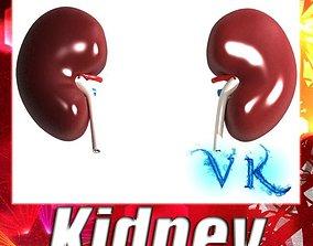 Human Kidneys 3D