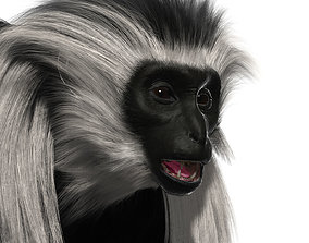Colobus monkey with realistic fur 3D model