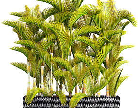 3D Collection of tropical plants 4