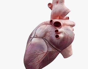 Heart Rigged 8K 3D asset