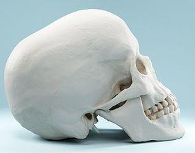 Human Skull 3D model VR / AR ready