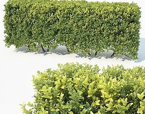 3D Buxus Sempervirens Nr6 modular hedge H80cm