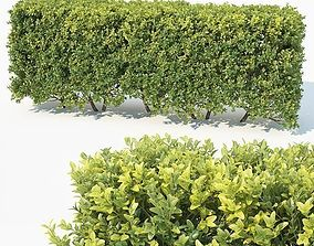 Buxus Sempervirens Nr6 modular hedge H80cm 3D model