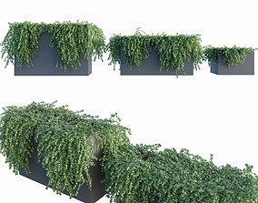 Ivy in tubs 1 - 3 module 3D model