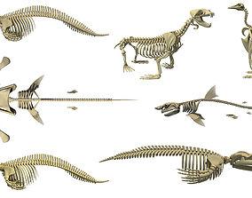 Aquatic Skeletons Models 3D