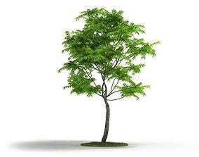 3D Thin Trunk Tall Tree