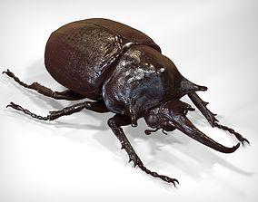 Elephant Beetle 3D nature