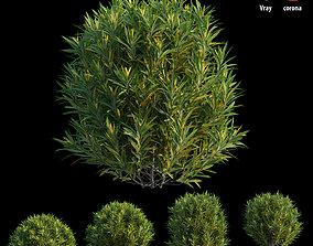 Croton plant set 09 green 3D model