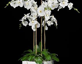 3D model Orchid Arrangement 4
