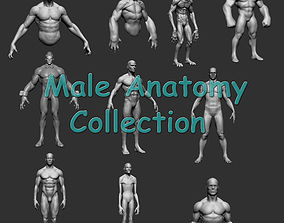 3D Male Anatomy Collection