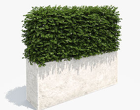 3D model Boxwood Hedge in White Planter