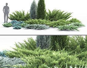 3D model Juniperus Pack 01