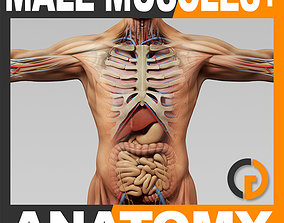 Human Male Anatomy - Body Muscles Skeleton and Internal 3D