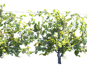 WinePlant Vineyard Grapes fruits from Italy 3D