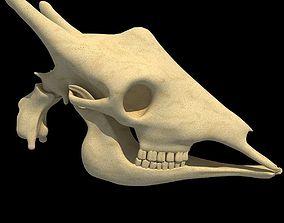 3D Full Giraffe Skull