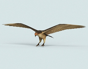 Game Ready Eagle 3D asset