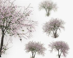 Tree Cherry 01 3D model