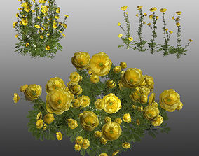 Flowers Buttercup 3D model game-ready