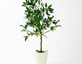 3D model Potted Lemon Tree
