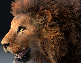 African Lion Rigged Hairs 3D model