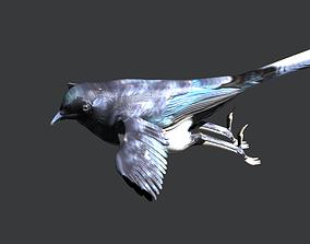 3D Eurasian Magpie