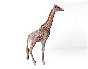 Giraffes full body 3D model