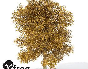 europe 3D XfrogPlants Autumn London Planetree
