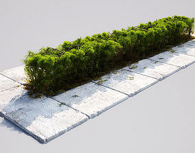 3D model hedge 16-06 AM148