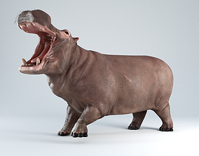 3D asset low-poly Hippopotamus Rigged