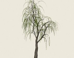 3D asset Game Ready Willow Tree 12