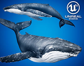 3D asset animated Humpback Whale for Unreal Engine 4
