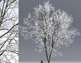 3D model Ash-tree 07 winter H15m